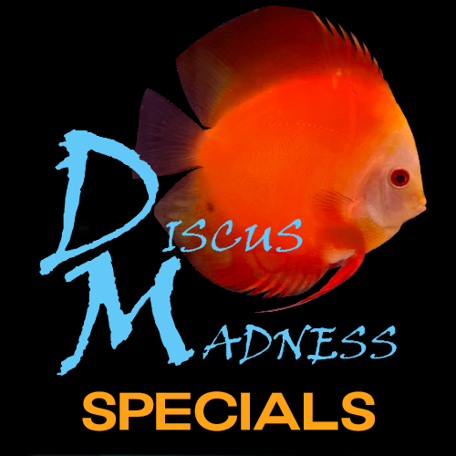 DM Specials