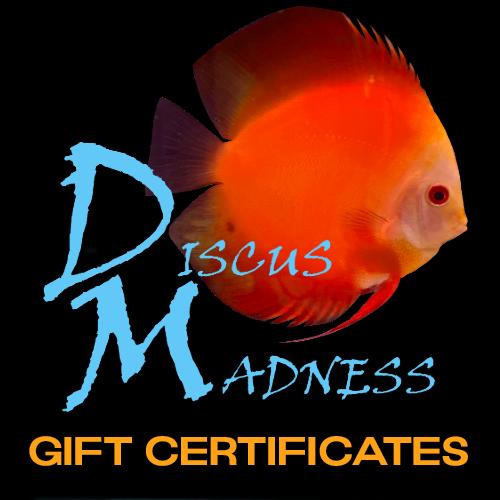 DM Gift Certificates