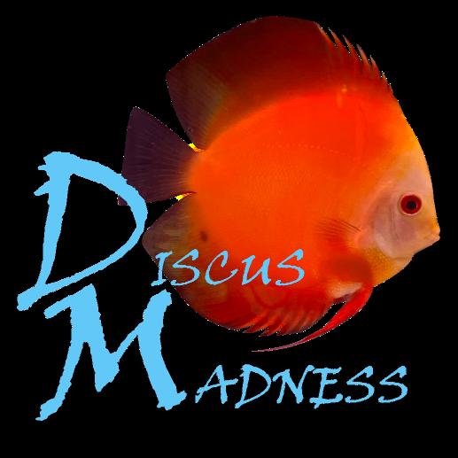 Discus Madness Logo
