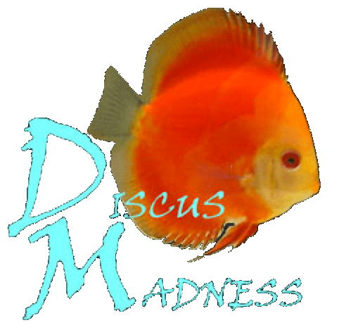 Discus Madness