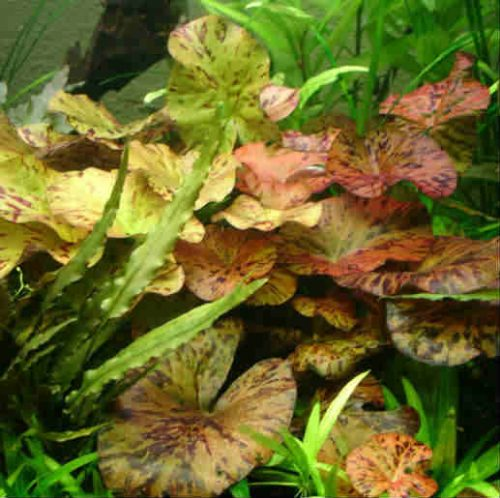 Live Plants & Care
